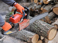 Tree service tree clean up branches storm clean up wood