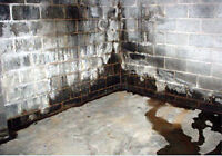 Your leaking Basement can hurt your families health