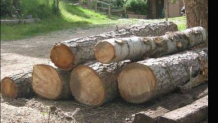Wanted: Logs trees wanted .