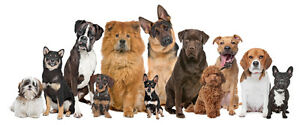 Doggy Doo Squad Pet Waste Removal Services Oakville / Halton Region Toronto (GTA) image 1