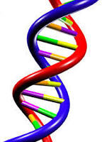 DNA and introductory Molecular Biology