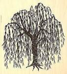 Bodias.Willow