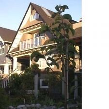Furnished Kitsilano Character 3 Bedroom Duplex Home #135d