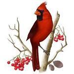 Cardinal Veneer