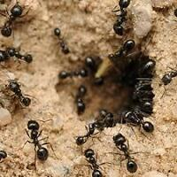 ANTS EXTERMINATION WITH WRITTEN GUARANTY