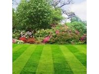 hedge/grass cutting general landscape tidy.