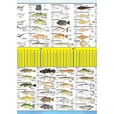 1.3 meter Australian Maxi Fish Ruler Harris Park Parramatta Area Preview