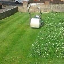 Overgrown grass cutting contact now