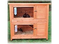 Looking for a Rabbit Hutch and 2 Rabbits