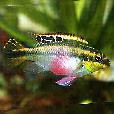 Fish (big and small), plants, shrimps for sale