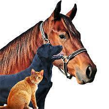 All Creatures Pet Services Sunshine Coast Region Preview