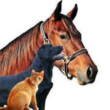 All Creatures Pet Services Gympie Area Preview