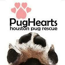 Pug Hearts of Houston