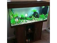 JEWEL RIO 180 LITRE FISHTANK IN DARKWOOD IN EXCELLENT CONDITION