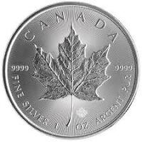 100 Canadian Silver Maples 2015