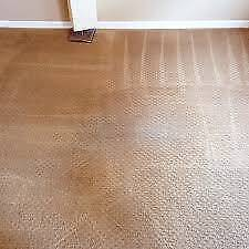 1 Stop Carpet cleaning and pest control services brisbane