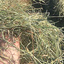 Free hay timothy orchard