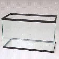 Looking to buy 10 gallon glass aquarium