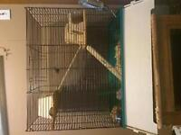 Two Friendly Gerbils! (Grey and Tan)