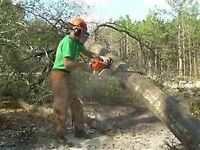 Tree Removal/Insured/Free Quotes