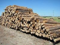 Wanted. Tree length or 8ft firewood