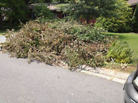 BRANCHES REMOVAL, MOVE OUTS, ALL JUNK REMOVAL 780-884-7800