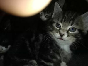 Good looking kittens need a new home to enjoy