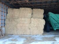 Hay For Sale - Large Square Bales