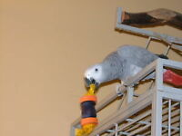 Bird Boarding in our home