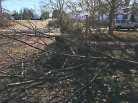 TREES AND BRANCHES REMOVAL – REASONABLE RATES