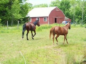 **** Horse Boarding in Enfield, NS **** Spaces available.