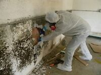 SAFELY Remove Your MOLD