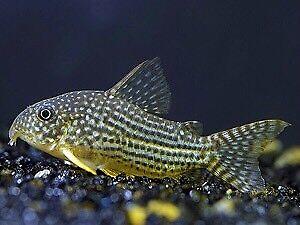 Fish list (Ottawa )