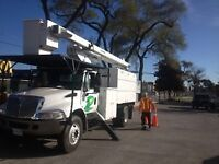 Tree Trimming and Removal 519-990-1627