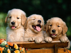 Buying a new puppy? Read this first!