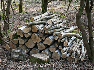 Open lot or yard space needed for wood storage WILL PAY $$