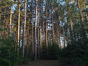 Lot à bois à vendre en Beauce