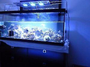 aquarium rimless pour vos coraux,coral,poisson, fish