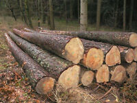 firewood softwood logs for sale