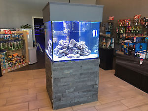 New fish arrived Jan.13, all life stock 20% off on this weekend!