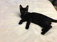 sweet black cats and kittens to donate