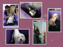 express mobile dog grooming for sale (must sale this month ) Doncaster Manningham Area Preview