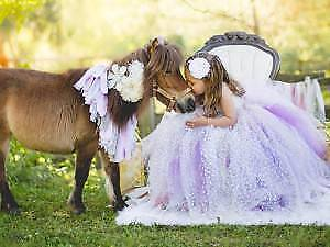 Magical Hinterland pony party