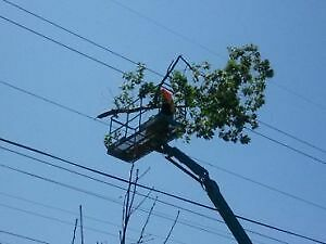 AFFORDABLE TREE REMOVAL & CONTRACTING SERVICE'S Cambridge Kitchener Area image 5