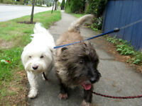 Friendly, reliable dog walker, St Clair and Mount Pleasant