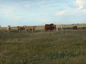 WANTED: PASTURE TO RENT