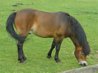 ISO Free Lease (Option to Buy) Pony