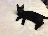 sweet Black cats and kittens need good homes!!!