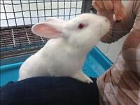 "Young Female Rabbit - New Zealand: ""Marie"""