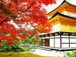 kyoto-create_jp